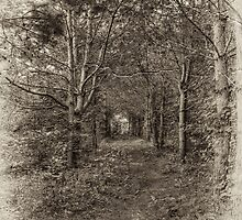 Dark Forest by Tutelarix