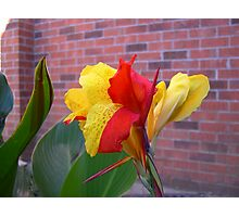 The Colorful Bloom Photographic Print