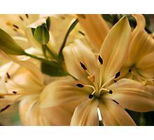 Peach lilies Photographic Print