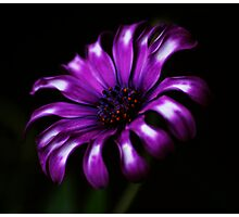 Purple Passion Photographic Print