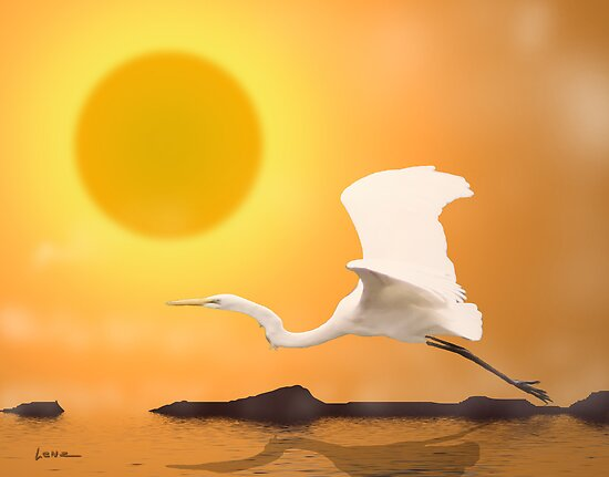 Egret Flying Into Sun by George Lenz