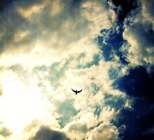 What would be the sky without birds ? by Marc Loret
