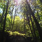 Frances Slocum Canopy 1 by Kevin J Cooper