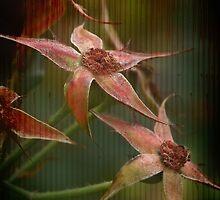 Rust 'n Roses ~ #6 by Rosalie Dale