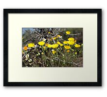 High Desert wild Flowers 2 Framed Print