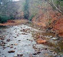 Cranberry River In Monongahela National Forest by Cleave