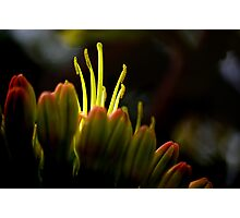 Agave Dance Photographic Print