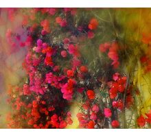 Red Bougainvillea Impression Photographic Print