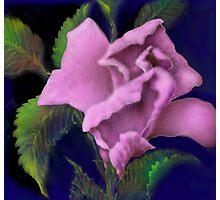 'Pink Parfait' Digital Rose Painting, Baroque Roses Photographic Print