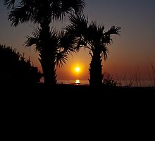 Palmetto Sunrise by eegibson