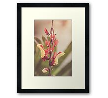 Dream Flower 38 Framed Print