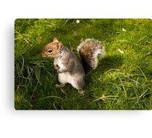 Squirrel in Bath, Somerset Canvas Print