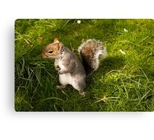 Squirrel in Bath, Somerset Canvas Print