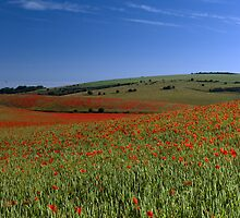 Land of Poppies 1 by Diado