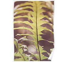 Dream Flower 39 Poster
