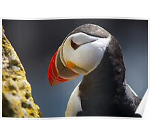 Puffin, Iceland Poster