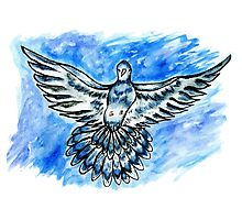 Dove in the Sky Photographic Print