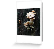 Triplet Falls Mushrooms Greeting Card