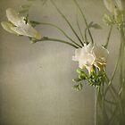 Floral Still Life by JoHammond