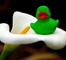 Garden Duck by Alyssa Dionne