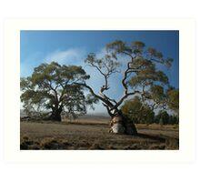 Gum Tree, Flinders Ranges SA Art Print