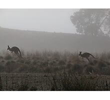 Roos on the Run Photographic Print