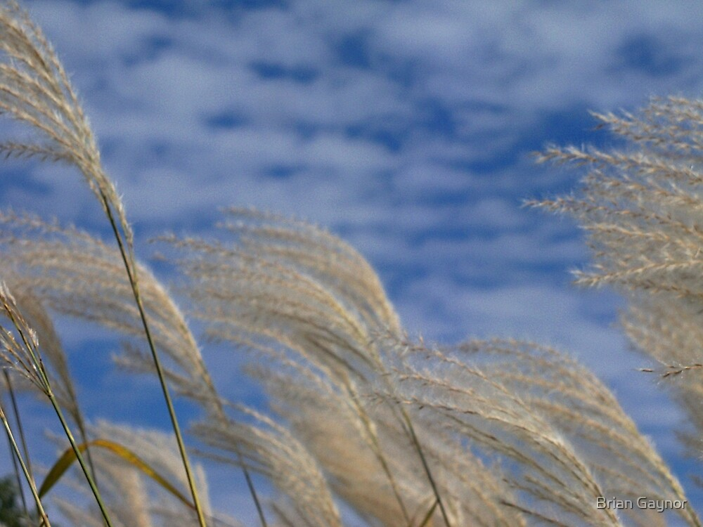 Swaying in the Wind by Brian Gaynor