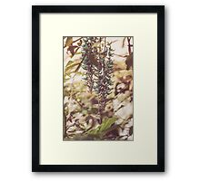 Dream Flower 41 Framed Print