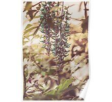 Dream Flower 41 Poster