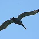 Pelican by SKNickel