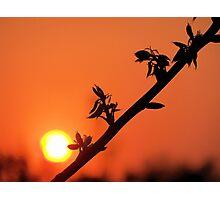 Beginning & End Photographic Print