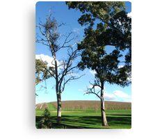 Vineyard View Canvas Print