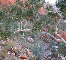 Ormiston Gorge by Joy & Rob Penney