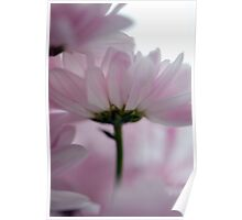 Pink Tulle Poster