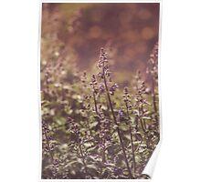 Dream Flower 42 Poster