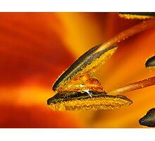 Pollen burger Photographic Print