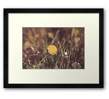 Dream Flower 43 Framed Print