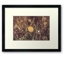 Dream Flower 43 Framed Print