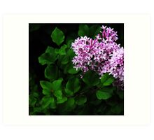 Lilac in the Green... Art Print