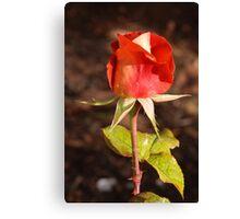 Ian Thorpe Rose Canvas Print