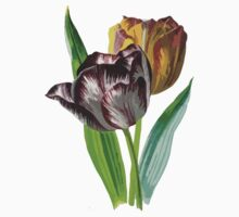 Tulip Vector on White Background Kids Clothes