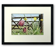 Snakesheads and Daffodils Framed Print