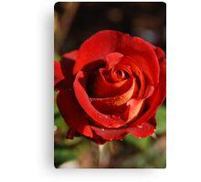 Rose--Ian Thorpe 2 Canvas Print