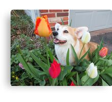 Scamp with Tulips Canvas Print
