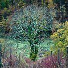 The Oak by Ilva Beretta