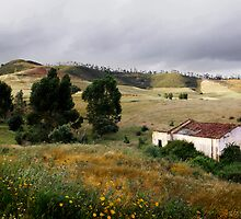 Alentejo Landscape by ccaetano