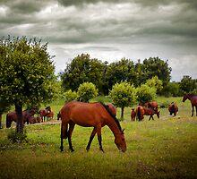 Alter Real Horses by ccaetano