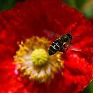 Bee Work by Luís Lajas