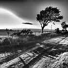 rays by Julian MacDonald