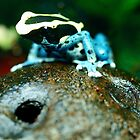 Patricia Dart Frog by tigerwings